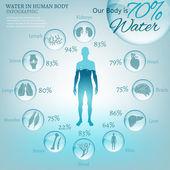 szervezetben a víz