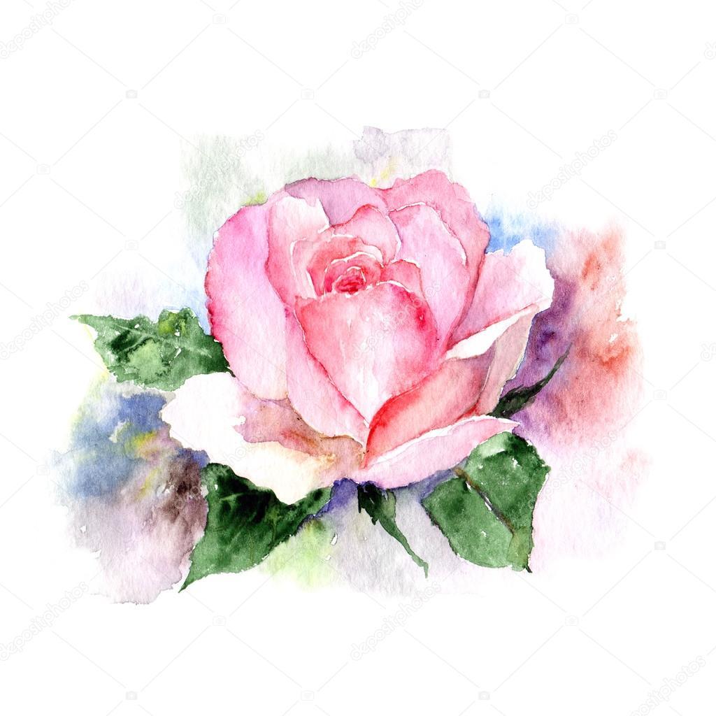 Vintage Rose Aquarelle Photographie Oaurea C 109952576
