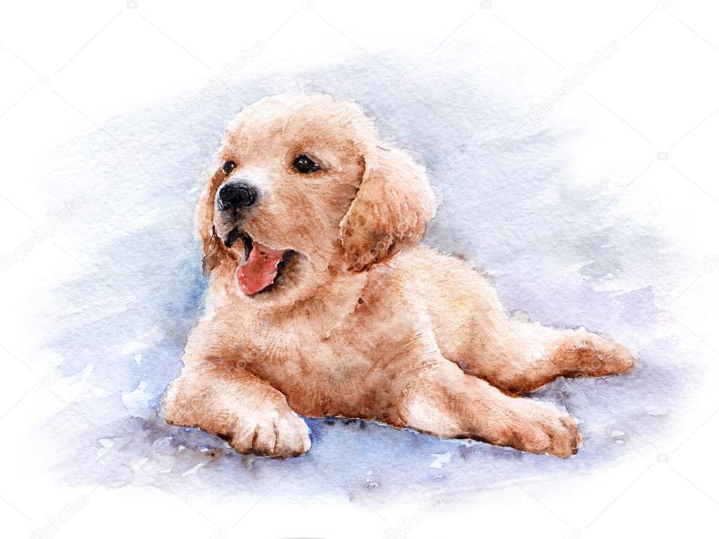 Golden Retriever Puppy Stock Photo C Oaurea 89746938