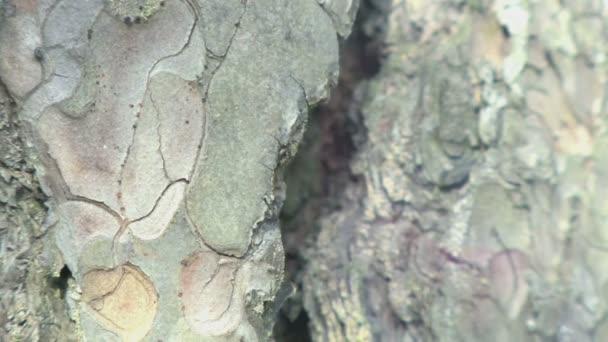 Stromová kůra zblízka textury