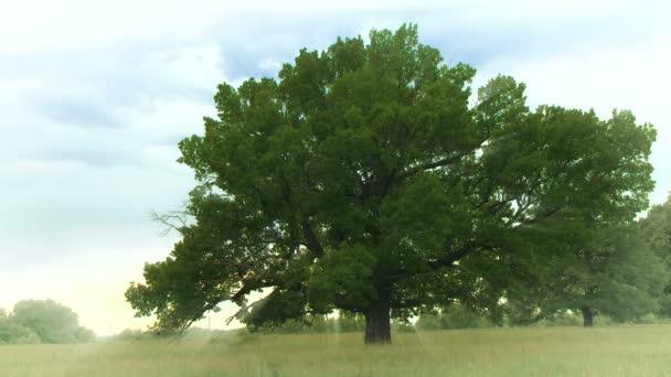 A zöld dombon egy tölgyfa