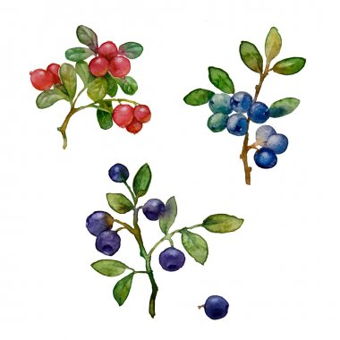 forest berries watercolors