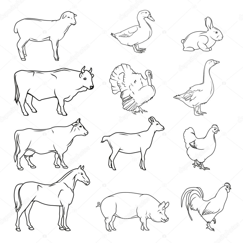 Image of: Clipart Hand Drawn Farm Animals Vintage Vector Stock Vector Depositphotos Meat Symbols Hand Drawn Farm Animals Vintage Vector Stock Vector