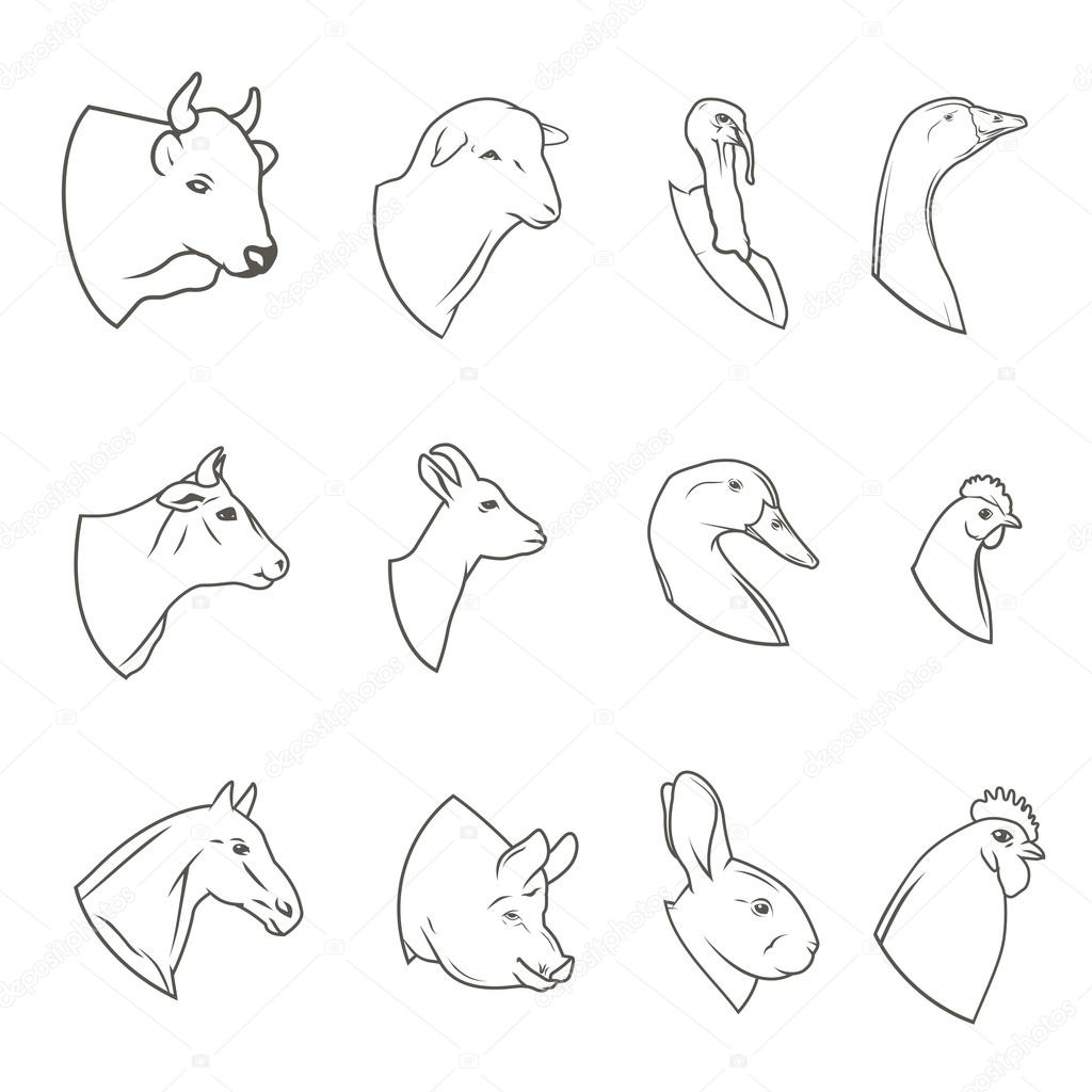 Line Art Farm Animals : Conjunto de iconos cabeza animal granja carnicería