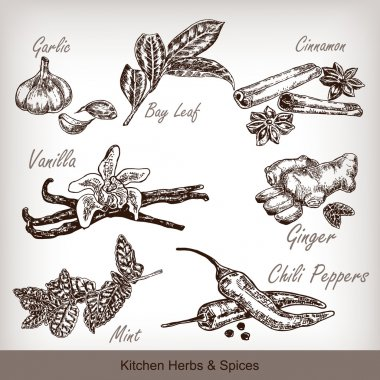 Kitchen herbs and spices set. Vector illustration
