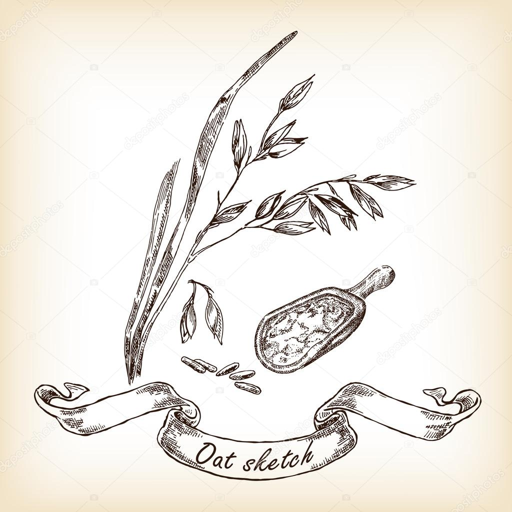 Oats and grain hand drawn. Vector