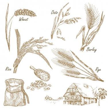 Wheat, rye, oats, barley, farm house in vintage style