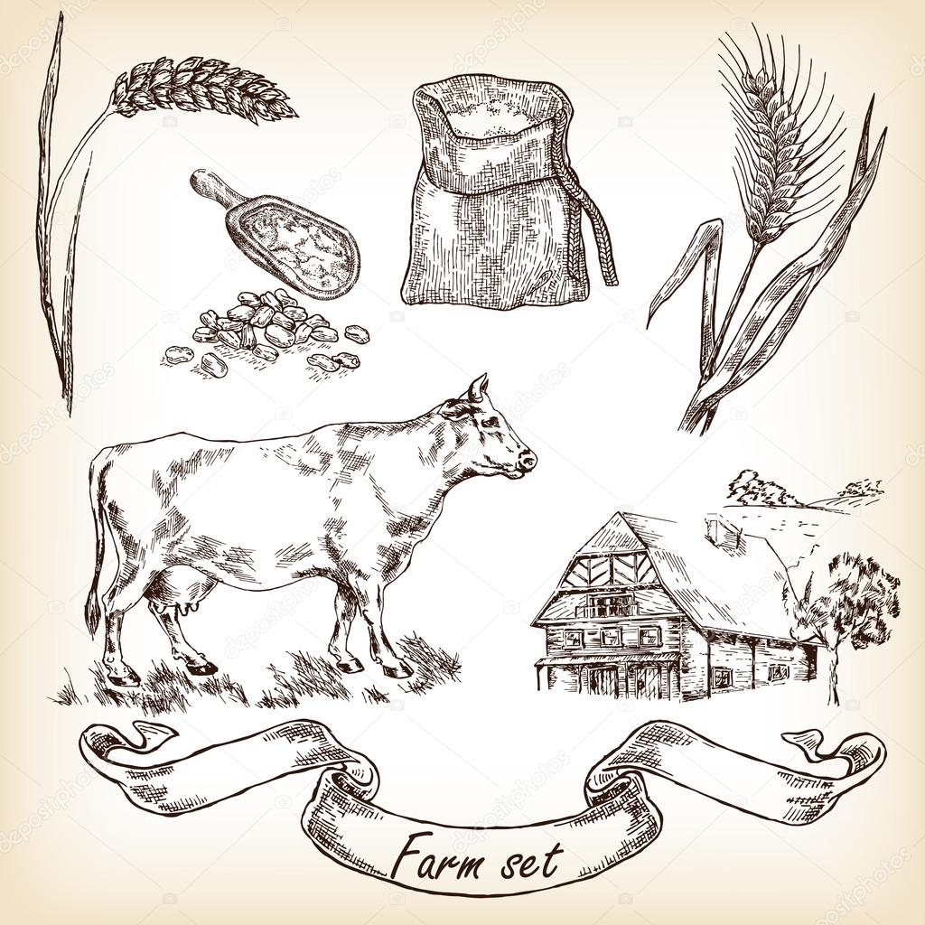 Cow, farm house, wheat. Vector