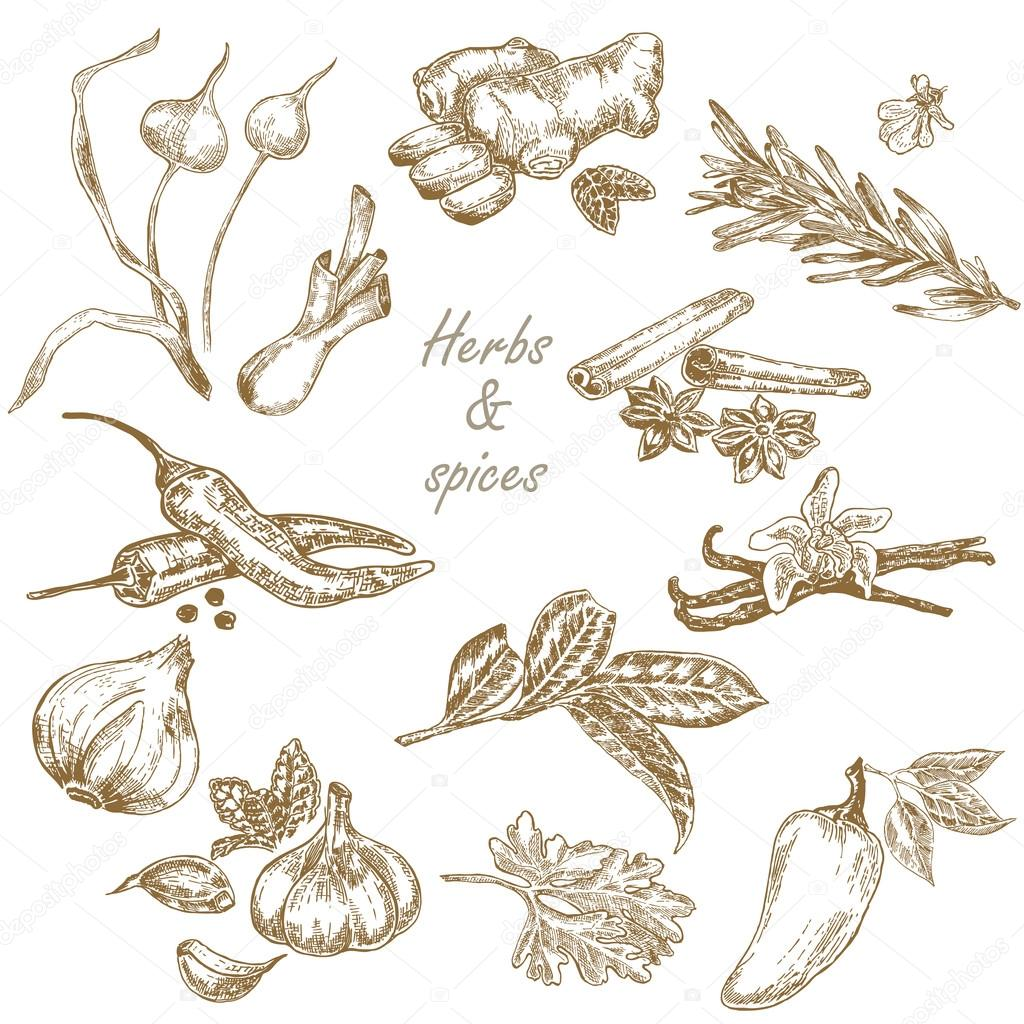 Kitchen herbs and spices set hand drawn vector illustration in s