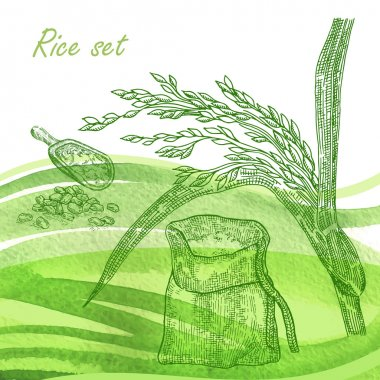 Rise set. Hand drawn rise plant and grain on watercolor