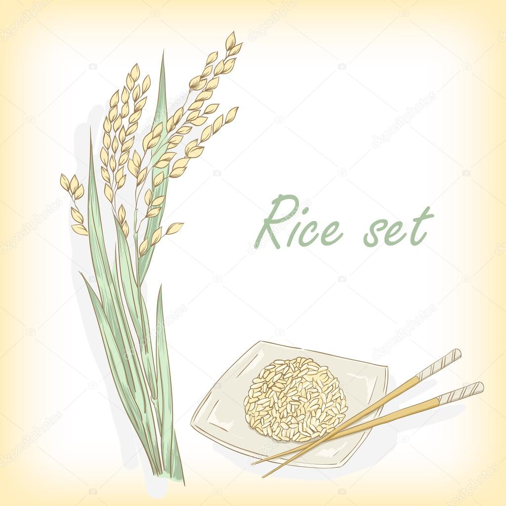 Rice plant, rice porridge. Vector illustration