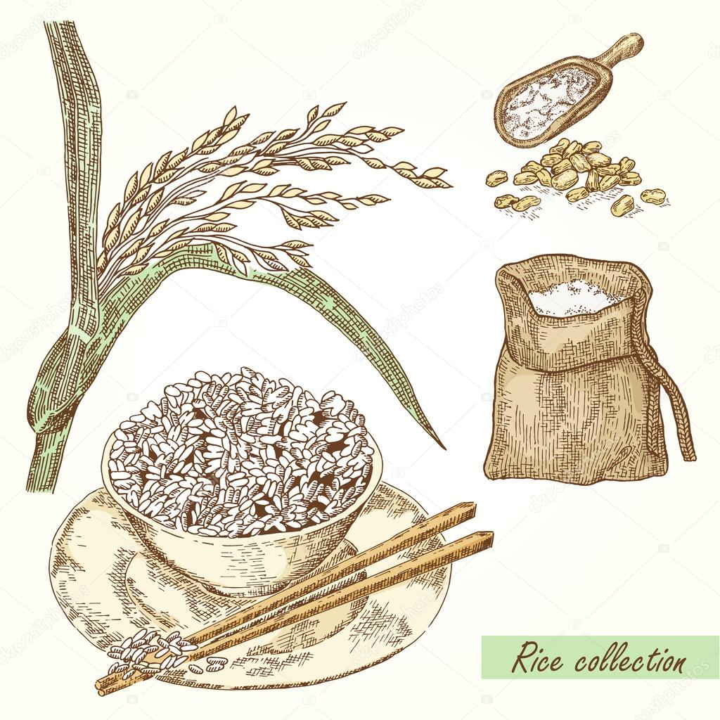 Rice set. Hand drawn illustration of Rice, bag, grain and plate