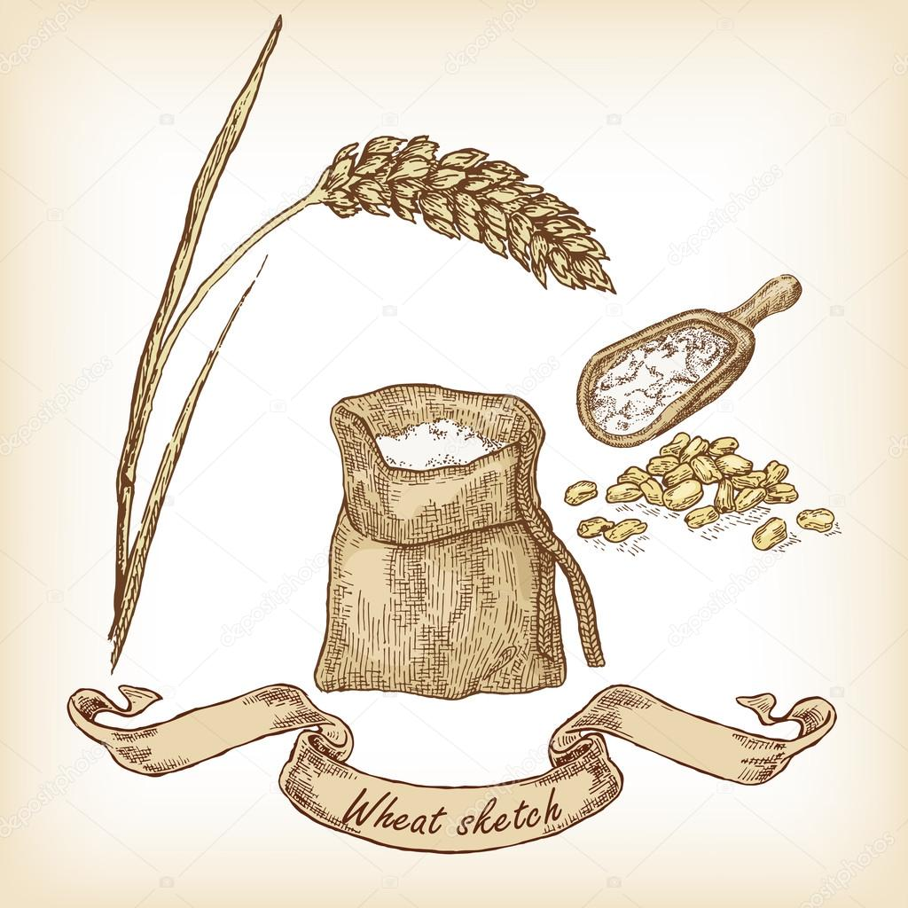 Wheat and grain. Vector illustration