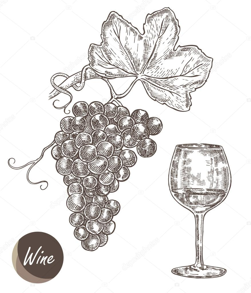 Bunch of grapes and wineglass. Vector illustration in sketch style