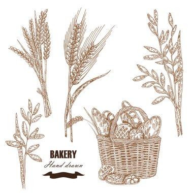 Cereals set. Hand drawn sketch illustration wheat, rye, oats, ba