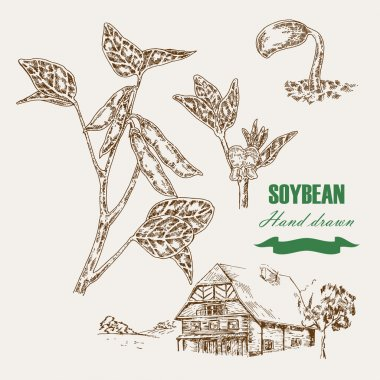 Hand drawn soy plant. Soy twig and soybean. Vector illustration