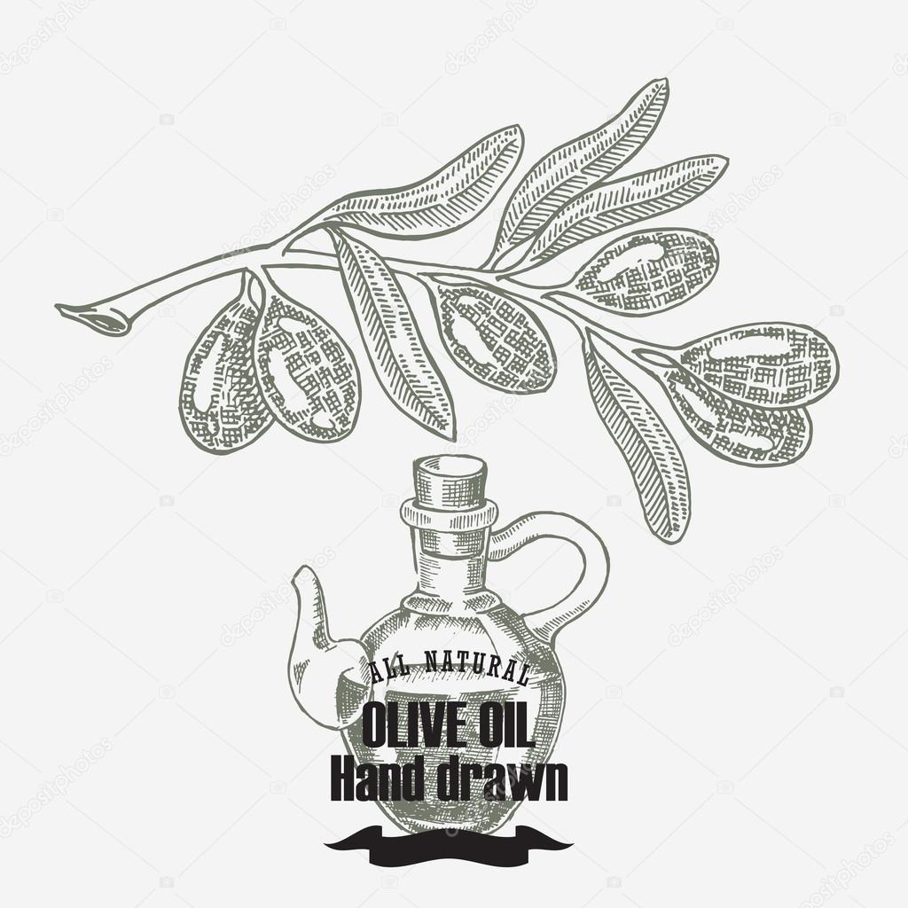 Olive oil vector illustration. Hand drawn olive tree and olive oil