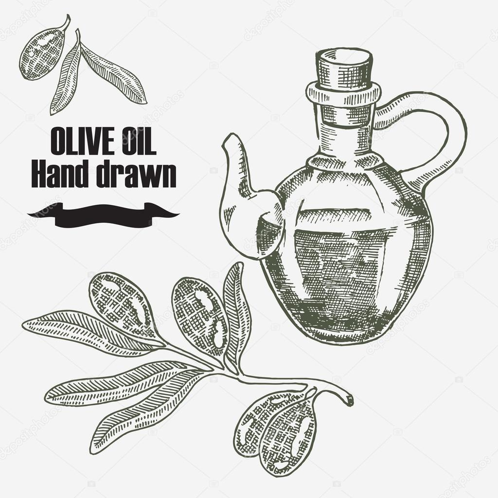 Olive oil vector illustration. Hand drawn olive tree and olive