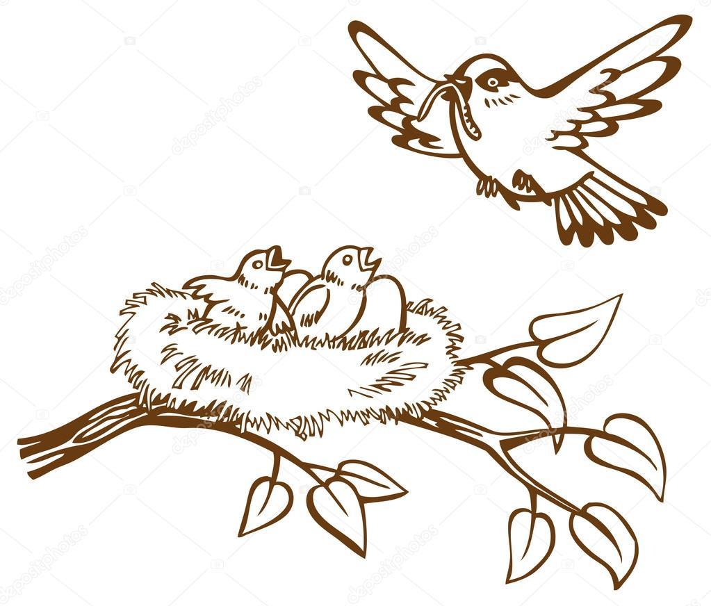 Kuş Yuvası Ve Civcivler Stok Vektör Olga1983siv1 62986957
