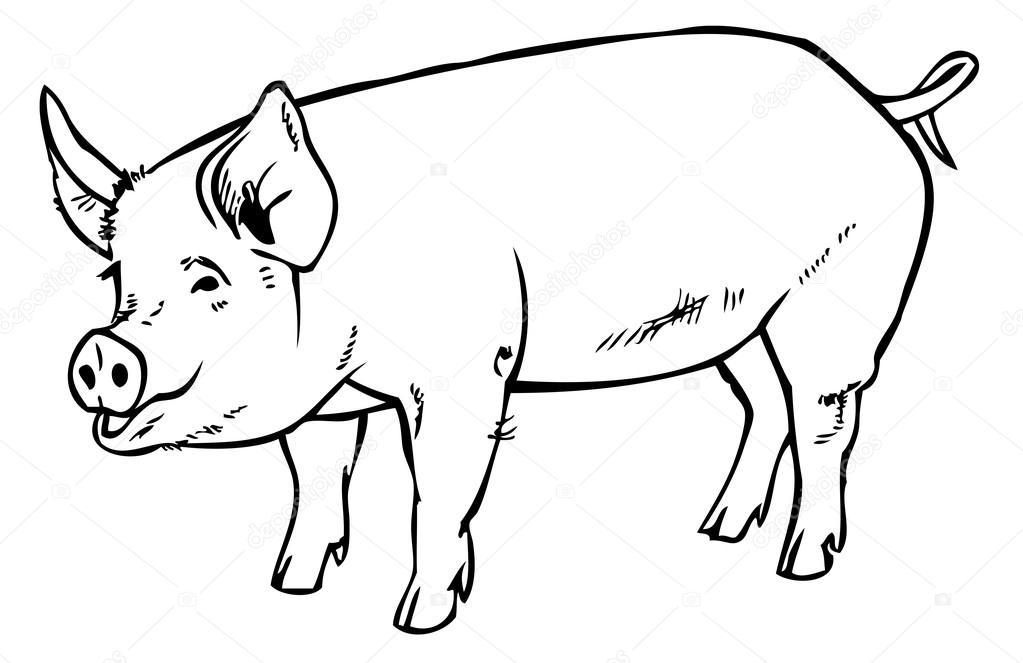 Main de dessin cochon image vectorielle olga1983siv1 85021116 - Dessin cochon ...