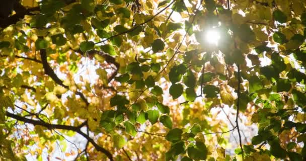 Autumn leaves with sun shining through