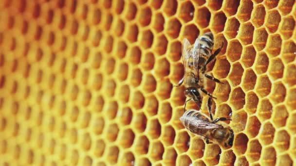 Pohled ze včel na plástve