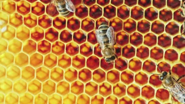 View of bees on honeycomb