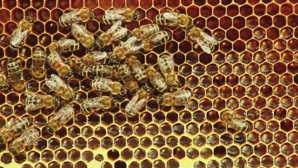 Blick auf Bienen auf Waben