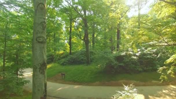 Slunce svítilo lesem v lese