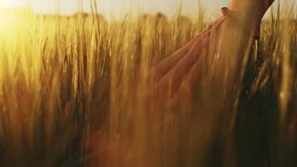 hand running through wheat field
