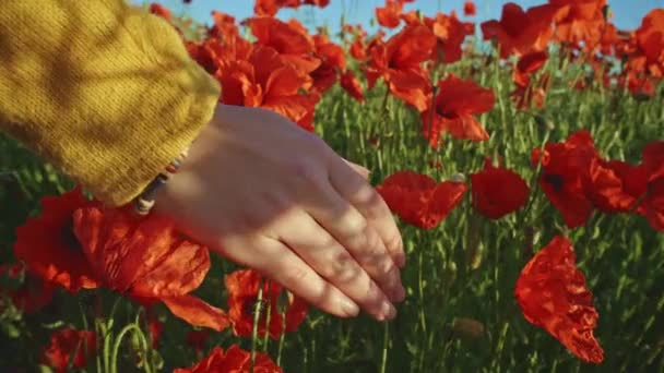 hand running through poppies field