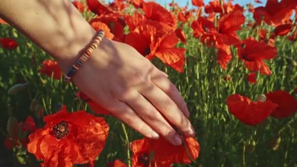 hand running through poppies field