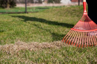 raking the grass, raking the garden