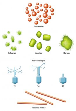 Vector virus icons.
