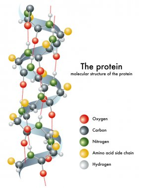 Illustration of the molecular structure of the protein. stock vector