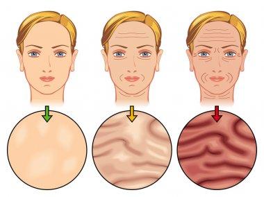 Human Skin aging
