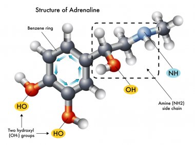 Medical illustration of the structure of adrenaline
