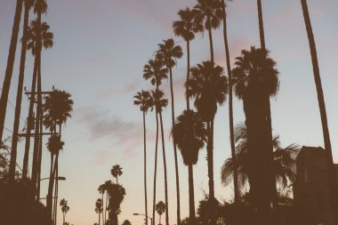 Beverly hills palms silhouette