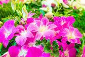 Zblízka krásná růžová orchidej