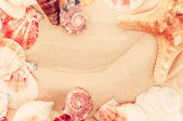 Fotografie vintage  summer background.closeup shell on sandy beach  with pl