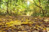 Fallin barevné listí na zemi, přírodní podzimní pozadí
