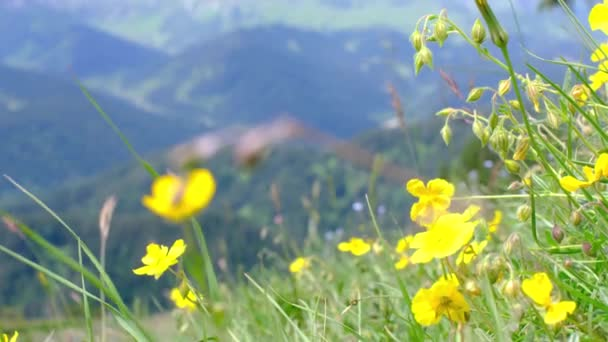 Divoké květiny na pozadí hor. Koncept místního cestování.