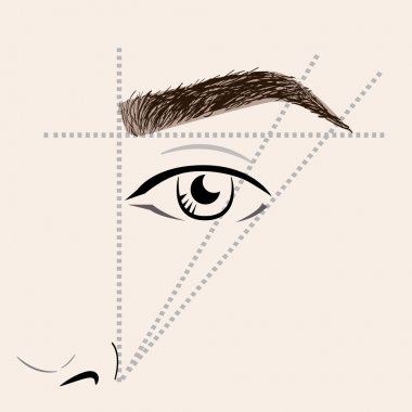 How to paint the eyebrows. Vector trendy makeup brows scheme.