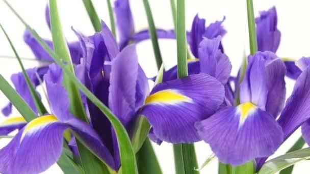 Iris flowers on white, rotation, close up