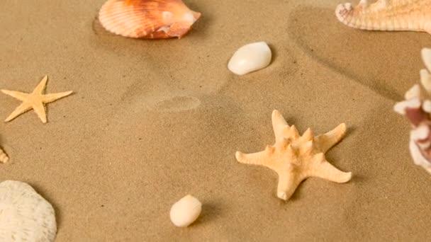 Starfish and shells on sand, rotation, closeup