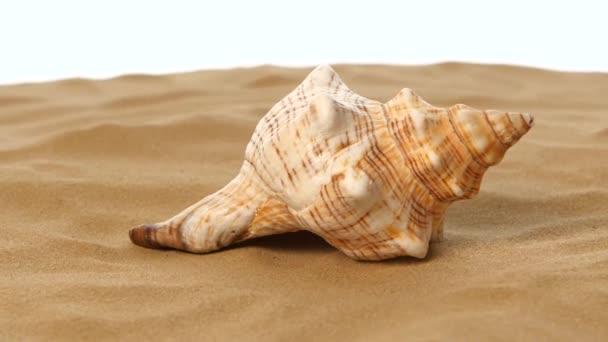 Mořské mušle s pískem, bílá, rotace, záběr