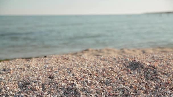 Shells on sea beach