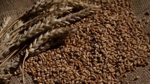 sklizeň zemědělských plodin zrna