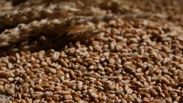 Wheat grains agricultural harvest