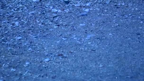 Malé mušle na písku